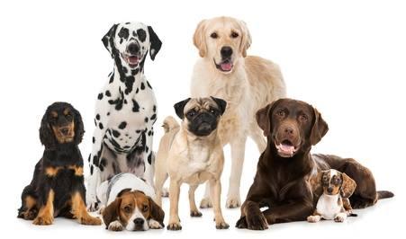 Friendliest Small Dogs Uk