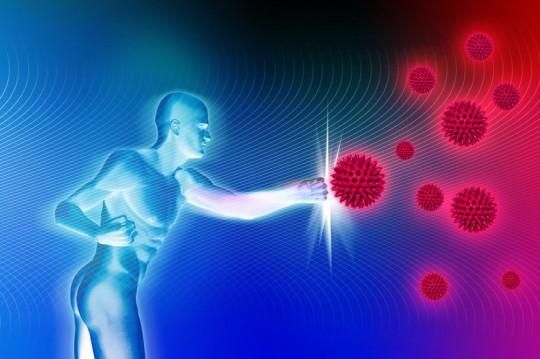 Hagebutten Stärken Das Immunsystem